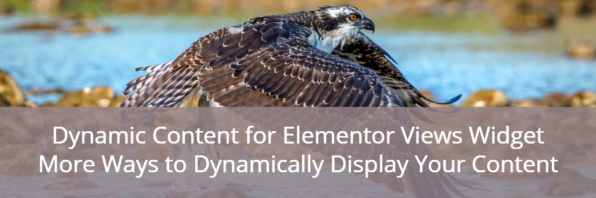 Dynamic Content for Elementor Views Widget